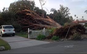 Downed tree Altadena 2011
